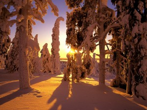 Snow-Covered-Forest-Finland-300x225